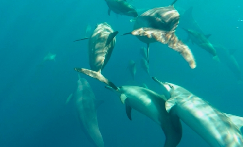Dolphines in the Tanon Strait for Global 3000